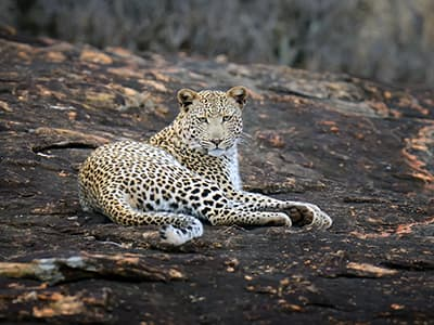 Limpopo Leopard Project