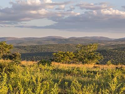 Conservation Management Vision