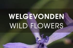 Welgevonden - Wild Flowers
